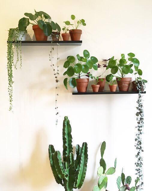 grand cactus jardiland good meilleur plante grasse dintrieur jardiland fontaine interieur. Black Bedroom Furniture Sets. Home Design Ideas