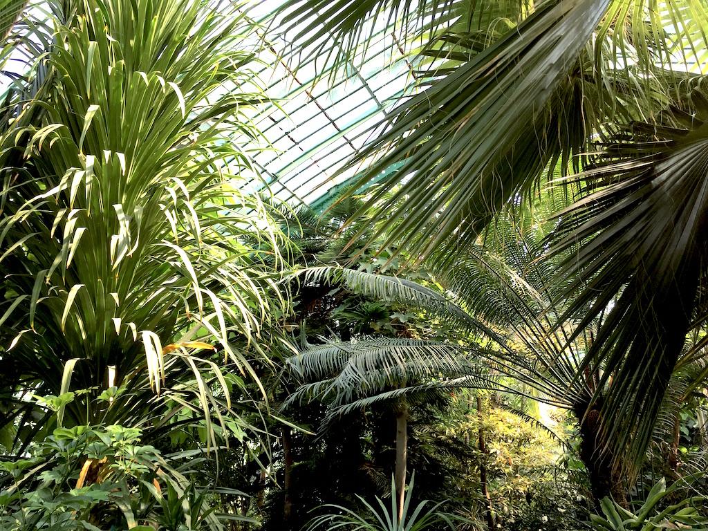 Dans le palmarium 2