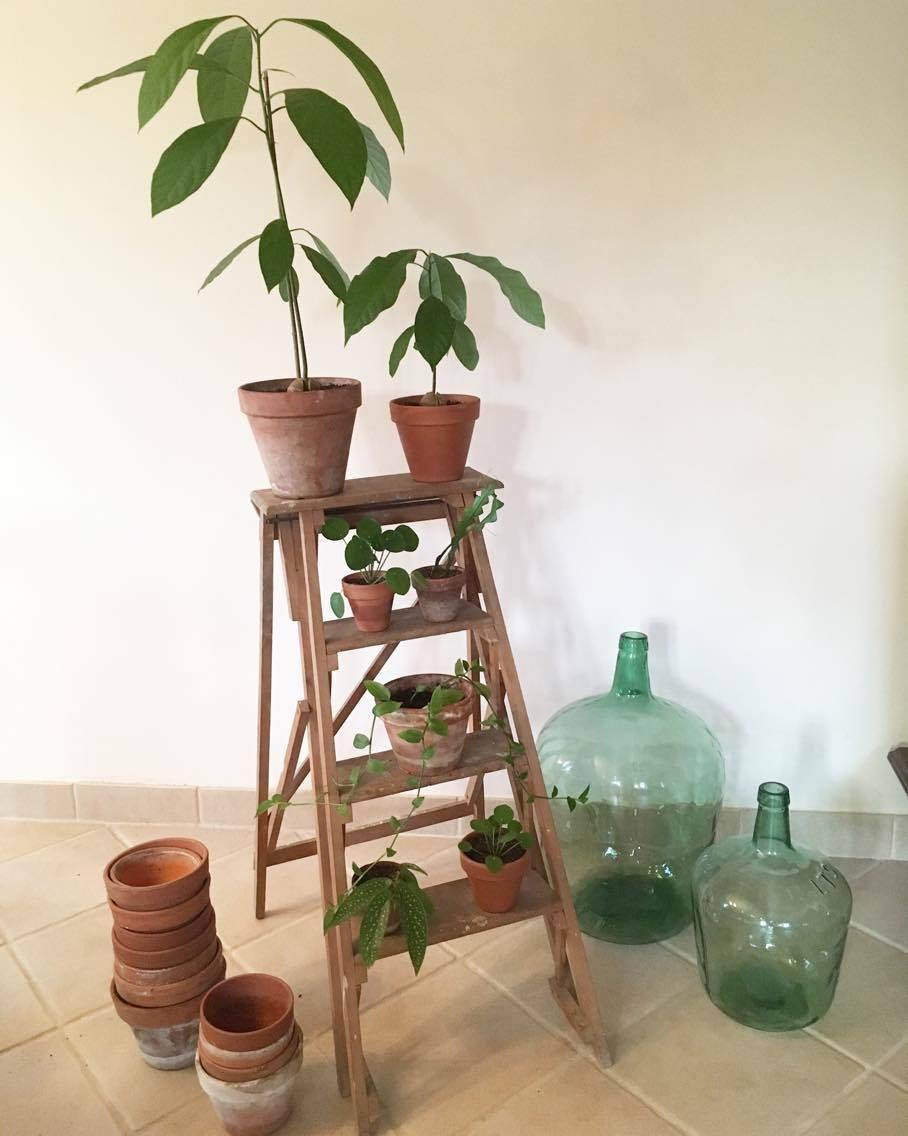 Plante D Intérieur Qui Aime La Chaleur comprendre les besoins de ses plantes d'intérieur.