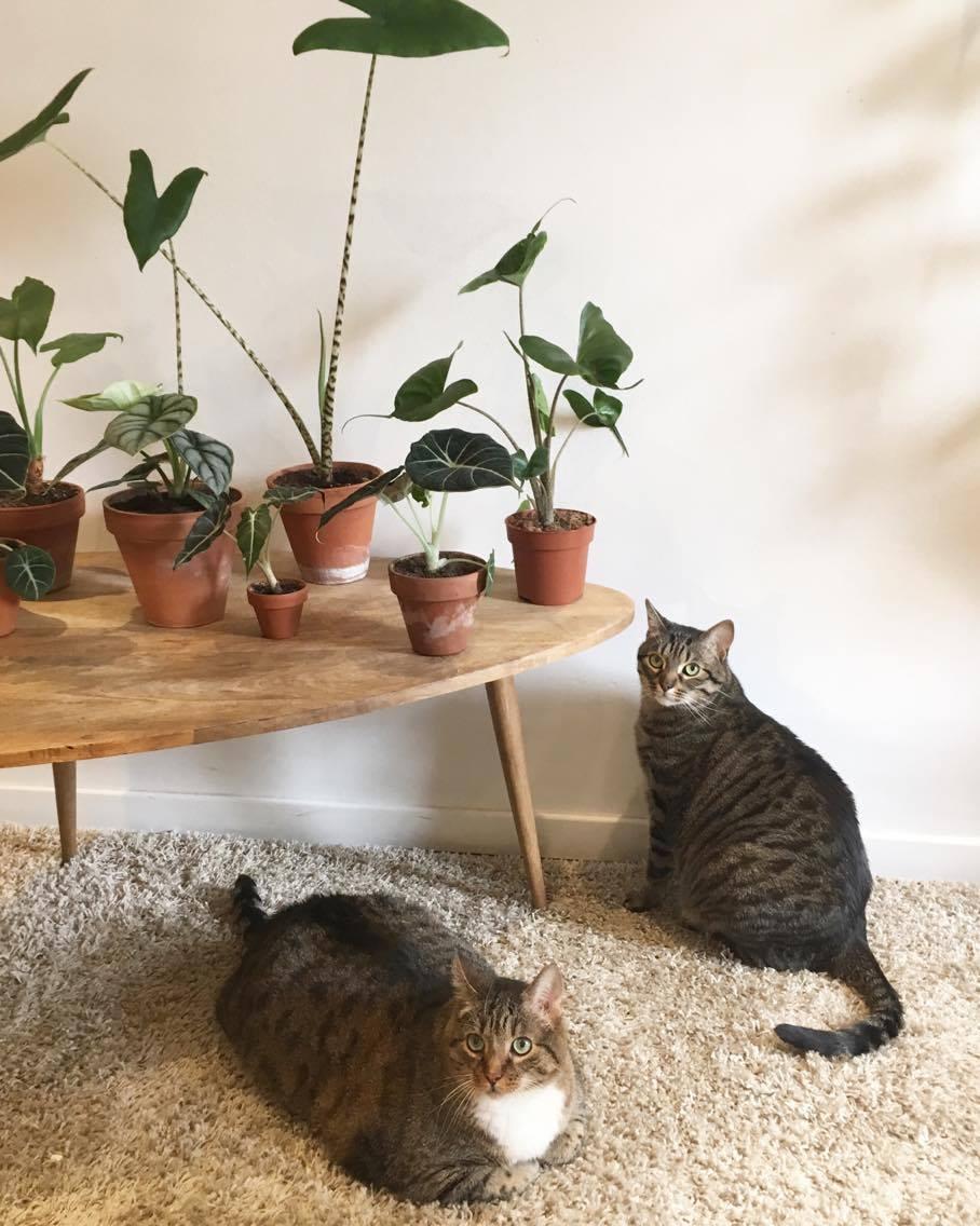 plantes non toxiques pour les chats plantes toxiques. Black Bedroom Furniture Sets. Home Design Ideas