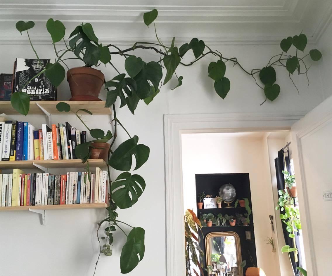 Des plantes et des chats for Plante yucca chat